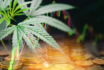 大麻,クロノス,決算報告