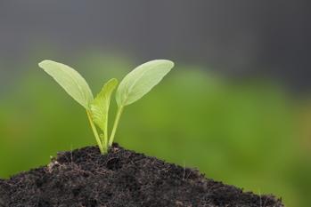 株式新聞,中国土壌対策