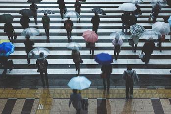 雨,高級傘,ビニール傘