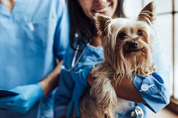 Dog Insurance in Singapore – What You Need to Know