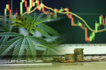 大麻セクター,CBD,銘柄