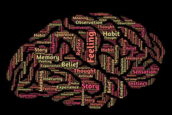 脳の成長サイクル,瀧靖之
