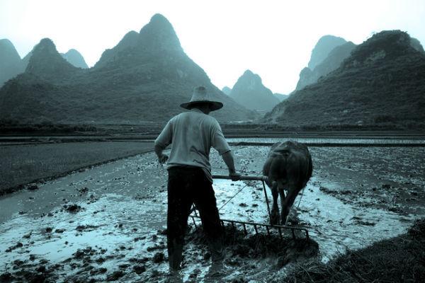 中国経済,農業