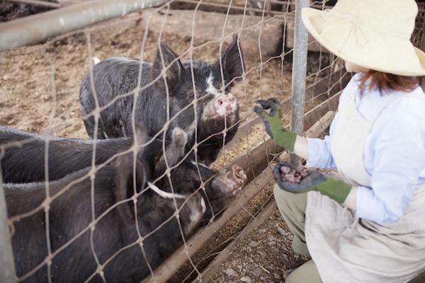 アリババ,中国経済,養殖産業