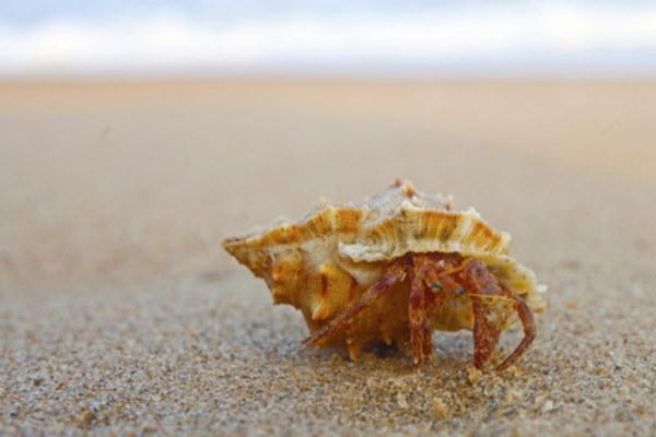 (写真=Alexandra Lande/Shutterstock.com)