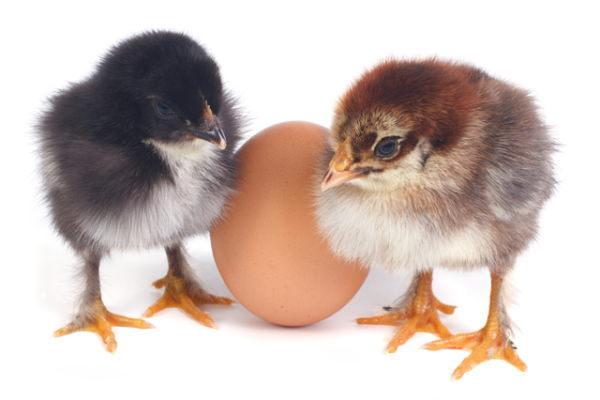 相場格言,卵が生まれるまで卵を買うな